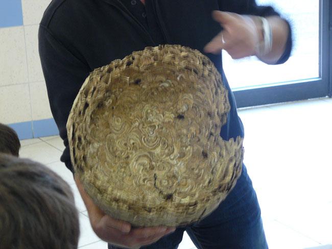 Vous regardez une image de l'article: Un cours sur les frelons à Labatut